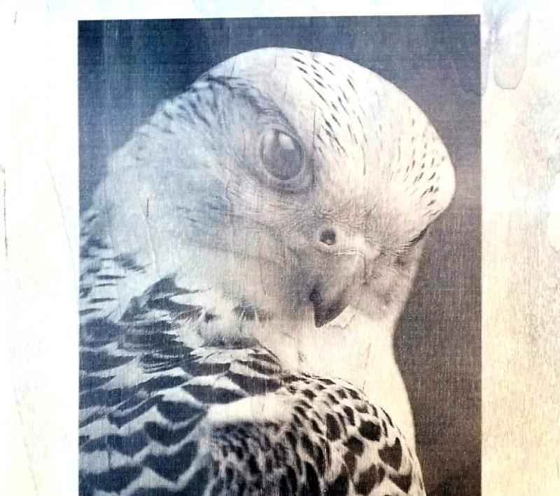 Laser Engraved Eagle in a Wood